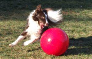 Rowan and Boomer Ball