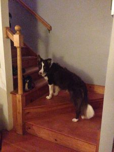 This is the bedtime positioning on the staircase, as demonstrated by Rowan