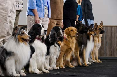 conformation-class-dogs