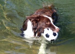 Rowan Swimming