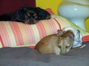 A boarding dog and a resident dog napping in 2009