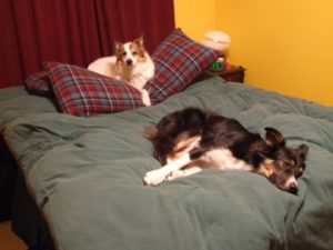 A boarding dog and my heart dog, Kai, napping in 2009